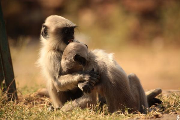 Les enfants sont aussi des singes