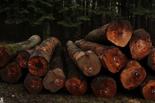 L'odeur du bois coupé