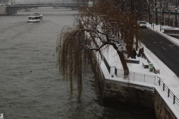 Le Saule de Seine