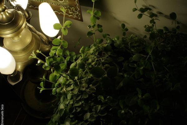 Plante illuminée