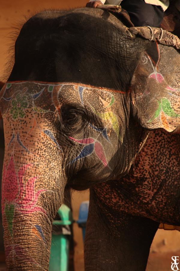 Bel éléphant coloré