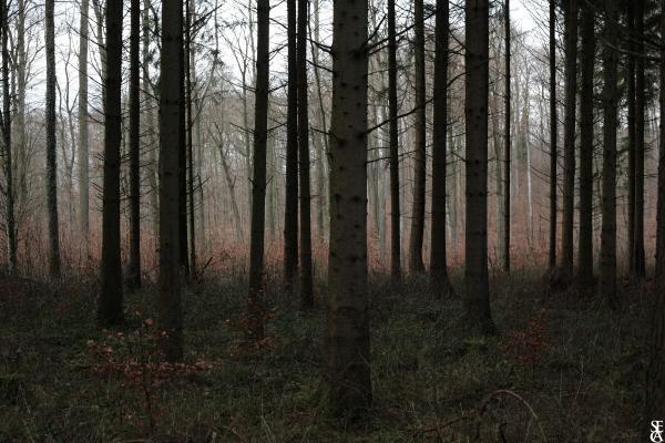 Forêt en Hiver 5