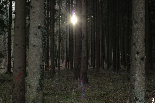 Forêt en Hiver 4