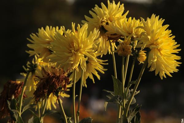 Les très jolies fleurs
