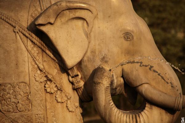 Elephant Garden