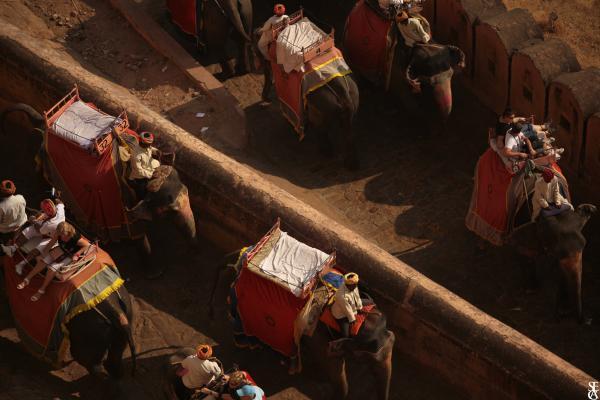 Au dessus des dos d'éléphants
