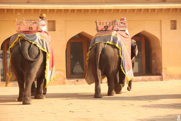 Les grands éléphants des Indes