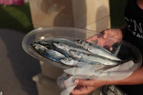 Pesca Fresca