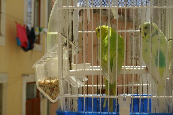 Cage Alfama